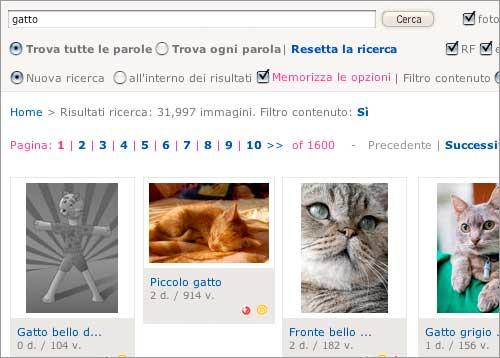 ricerca-gatto